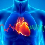 Your Heart Senses Events BEFORE They Happen (Study Shows)