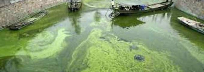 Alt. Fuel: Scientists Turn Algae into Usable Fuel in Less than an Hour