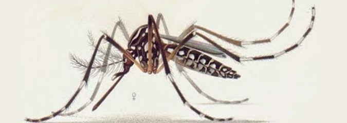 GMO Mosquito Trial in Brazil Has Reverse Effect, Causes Dengue Fever Emergency