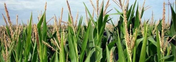 USDA's Greenlighting of 'Agent Orange' Crops Sparks Condemnation