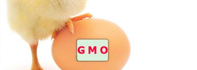 Big Blow to Biotech: German Super Market Giants Force Return to GMO-Free Poultry