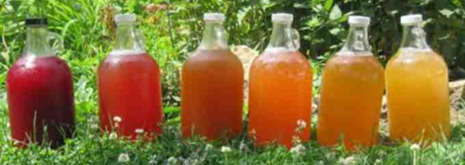 Top 10 Reasons You Should Be Drinking Kombucha