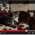 Cat Takes the Lead as Guide for Blind Dog