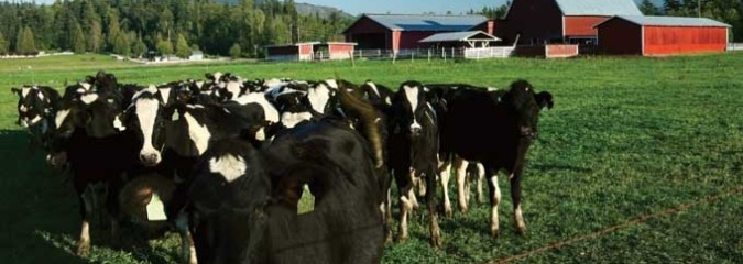 Organic Consumer Pressure Works—Stonyfield Quits International Dairy Foods Group