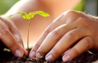 Growing Down: How to Cultivate the Soil of Your Soul