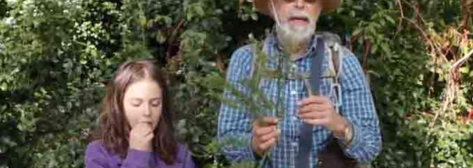 Wildman Steve Brill Shows You How to Forage 6 Delicious Plants In Your Local Urban Park (Video)