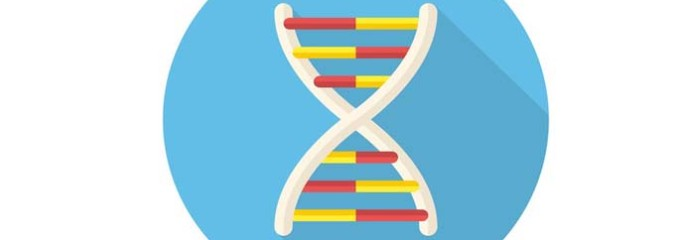 Three Perspectives on DNA