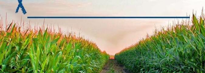 Anti-GMO Petition Receives 59,742,753 Signatures