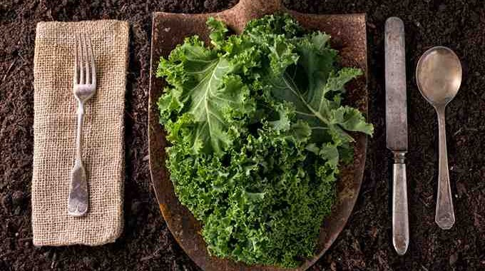 Top 12 Superfoods For People Over 50