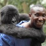 Virunga: An Award-Winning Documentary That's Making An A Difference