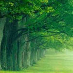 Tree Hugging Now Scientifically Validated