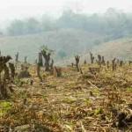 Brazil Arrests 'Amazon's Biggest Destroyer'