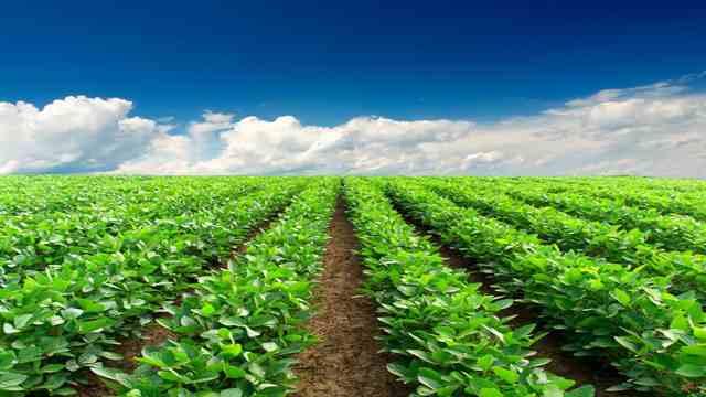 The Importance of Choosing Local Organic Farm Food