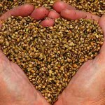 7 Super Seeds That Will Enhance Your Health