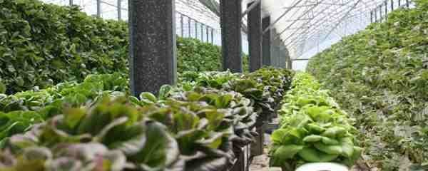 Urban Farming: Solving Problems In The U.S. Food System