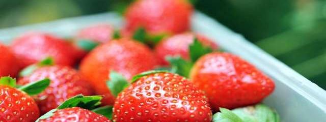 The Disease-Fighting Benefits of Strawberries