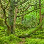 Algae Canopy Generates Oxygen Equivalent to 400,000 Square Feet of Wooded Forest