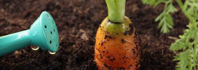 Have a Better Garden: 5 Surprising Ways to Use Recycled 'Garbage'