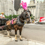 ADL Criticizes Famous Ally for Characterization of NYC Horse Abuse