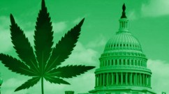 This Bill Will Finally End Cannabis Prohibition This-Bill-Will-Finally-End-Cannabis-Prohibition-242x135