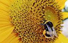 """Norway Offers Bees Safe Passage On The World's First """"Bee Highway"""""""