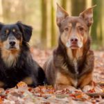 7 Eco-Friendly Tips for Pet Owners