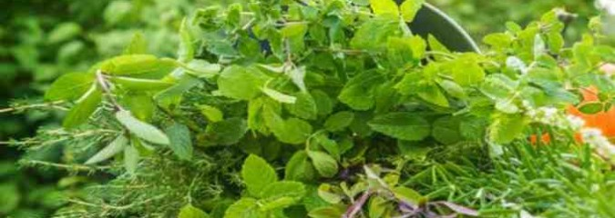 How To Use These 10 Herbs That Improve Psychic Ability