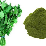 Cilantro and Chlorella can Remove 80% of Heavy Metals from the Body within 42 Days
