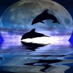 """India Declares Dolphins To Be """"Non-Human Persons"""", Dolphin Shows Banned"""