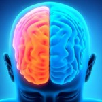Old Drug New Treatment: Brain Damage Repair Now Possible For Stroke Victims
