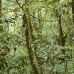New Study Finds Tropical Forests Absorbing More Carbon Dioxide Than Previously Thought