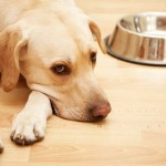 How Medicinal Marijuana is Now Curing Chronic Issues in Dogs