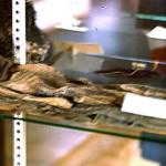 New 'Smoking Gun' Photo Of Dead Alien Emerges