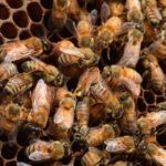 Demanding Ban on Deadly Pesticides, Advocates Drop Millions of Dead Bees on EPA Doorstep