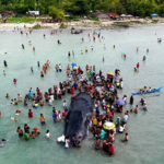 Another Beached Whale Found Dead with Plastic and Fish Nets In Its Stomach