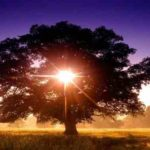 Pruning the Tree of Expectation: How What We See Has Roots in What We're Looking For
