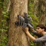 Activists Are Deploying Recycled Solar Powered Cell Phones To Save Rainforests