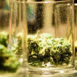 New Analysis Shows Federal Marijuana Legalization Could Raise $130 Billion, Add 1 Million Jobs by 2025