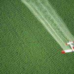 EPA Considers Allowing Bee-Killing Pesticide to Be Sprayed on 165 Million Acres of U.S. Farmland